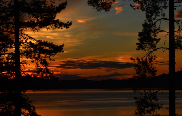 Picture trees, sunset, river, shore, silhouettes