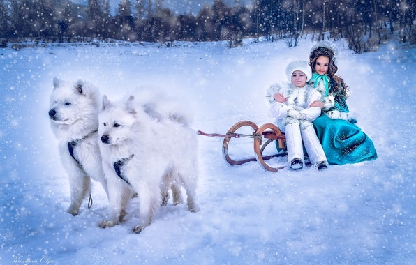 Picture winter, dogs, snow, children, boy, girl, sleigh, lady, Samoyeds