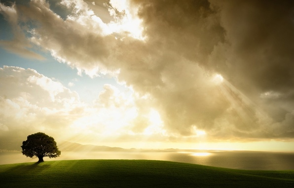 Picture field, the sky, clouds, Tree, sunlight