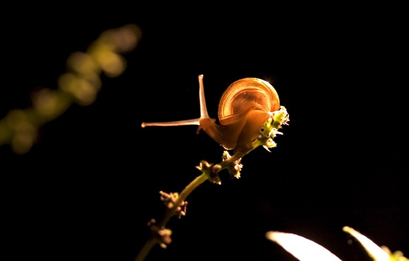 Picture light, plant, snail