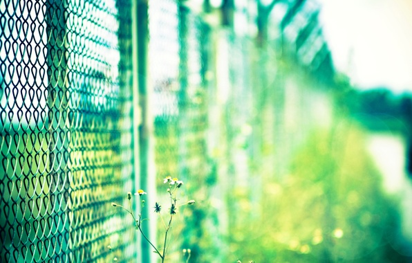 Picture flower, the sun, macro, green, mesh, Wallpaper, plant, blur, the fence, day, wallpaper, widescreen, background, …
