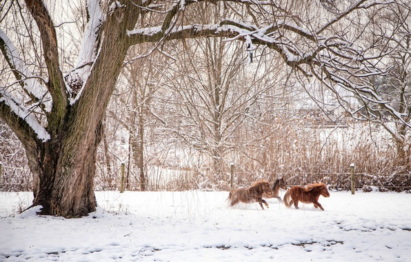 Picture winter, animals, snow, trees, branches, nature, horses, fence, horse