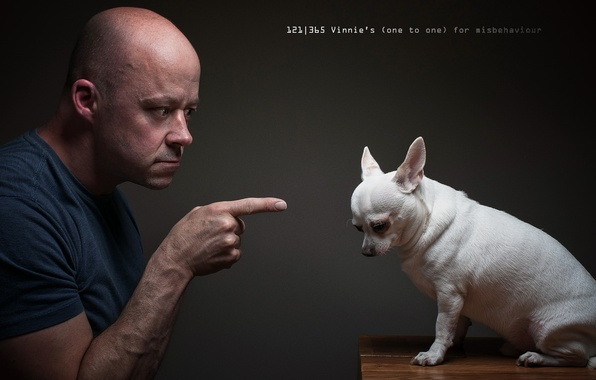 Picture people, the situation, dog