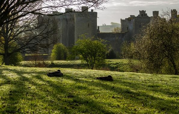 Picture grass, trees, castle, field, England, Bodiam Castle