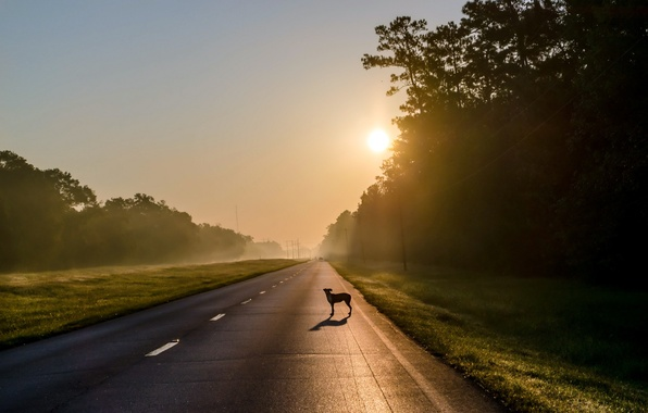 Picture road, fog, each, dog, morning