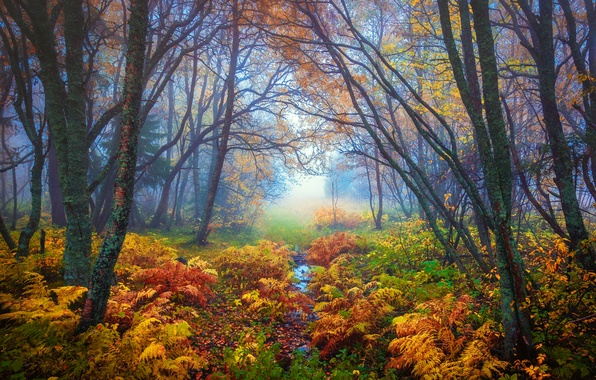 Picture autumn, leaves, trees, branches, nature, fog, yellow, Forest, fern