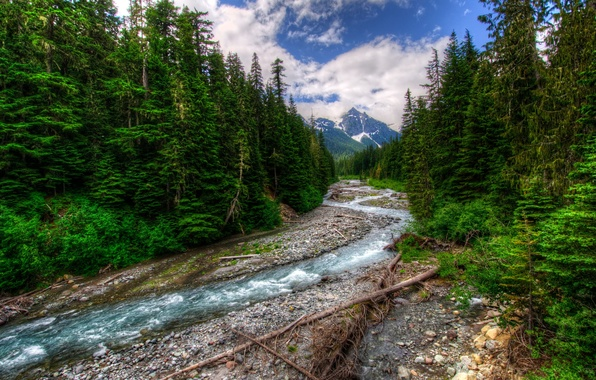 Picture forest, snow, trees, river, mountain, river, cloud.