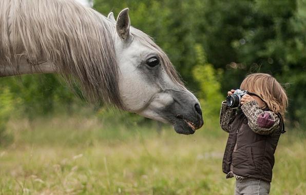 Picture face, horse, horse, boy, the camera, photographer, mane, paparazzi