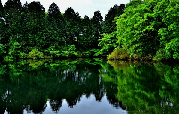 Picture greens, trees, nature, lake, reflection