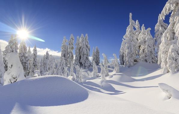 Picture winter, snow, trees, ate, Canada, the snow, Vancouver, Canada, British Columbia, Vancouver, British Columbia