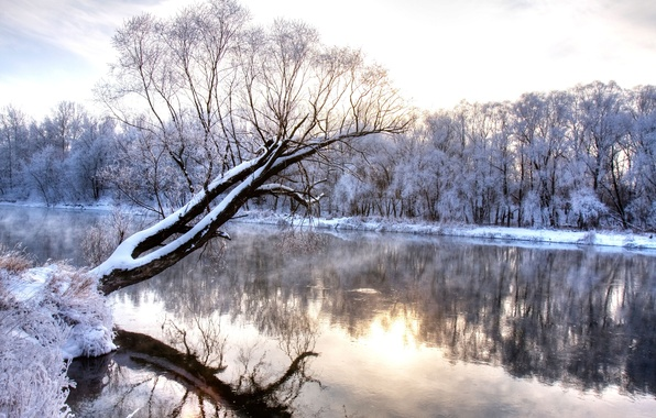 Picture cold, winter, trees, landscape, nature, reflection, river, wonderland, frozen forest, branch, frost, winter river, snowy, …