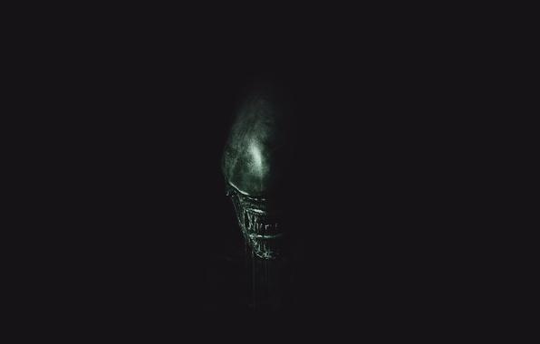 Picture green, wallpaper, horror, black, exoskeleton, monster, alien, Alien, science fiction, predator, sci-fi, movie, fang, killer, …