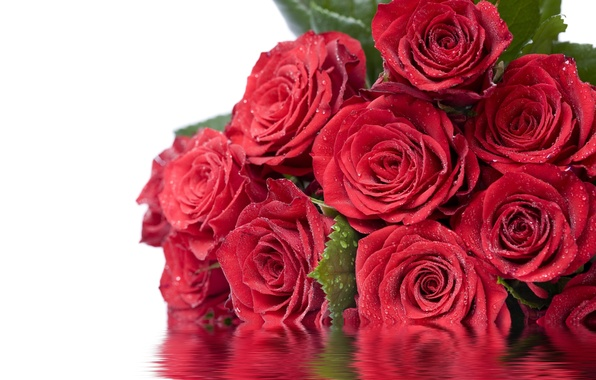Picture leaves, water, drops, flowers, reflection, roses, red, Dear Ladies On March 8!