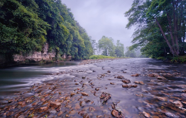 Picture forest, trees, river, stones, for, stranded, river