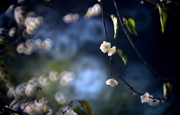 Picture leaves, flowers, branches, spring, flowering, drain