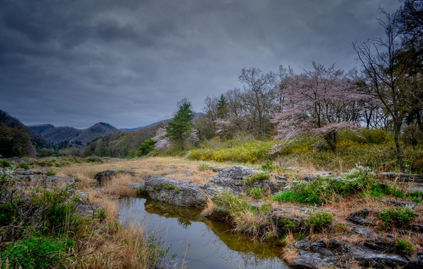 Picture trees, clouds, hills, spring, flowering, pond