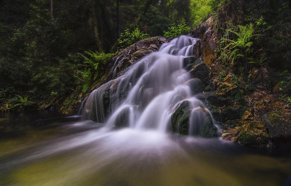 Picture forest, nature, waterfall, plants