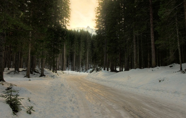 Picture winter, road, forest, snow, trees, spruce, turn, coniferous, slush