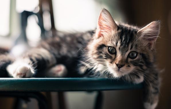 Picture look, muzzle, cat