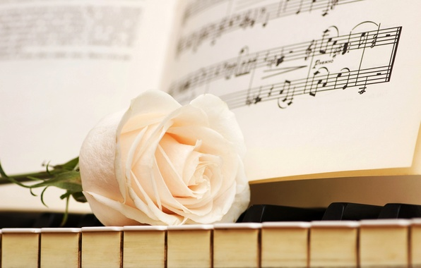 Picture notes, rose, keys, white, piano