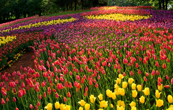 Picture summer, trees, flowers, Park, tulips, colorful