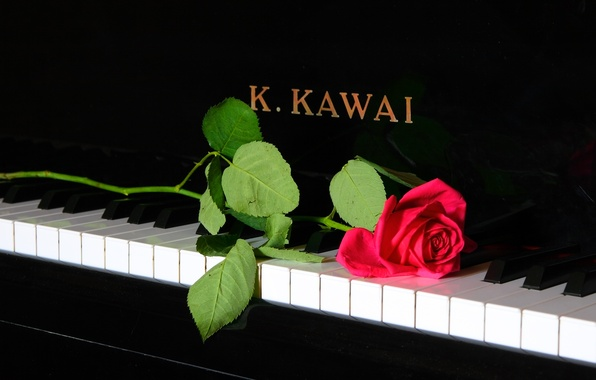 Photo Wallpaper Music Rose Piano