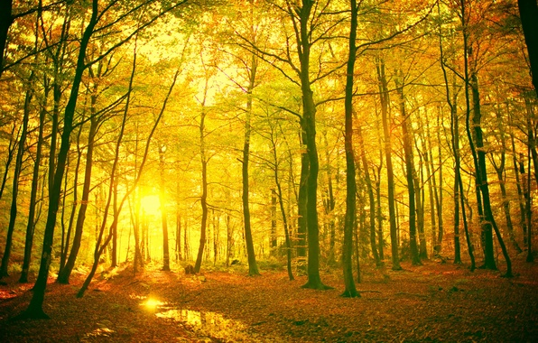 Picture leaves, the sun, rays, trees, landscape, branches, yellow, red, nature, background, tree, widescreen, Wallpaper, trunk, ...