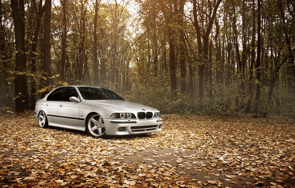 Picture forest, leaves, Autumn, BMW, BMW, Stance Works, M5 E39