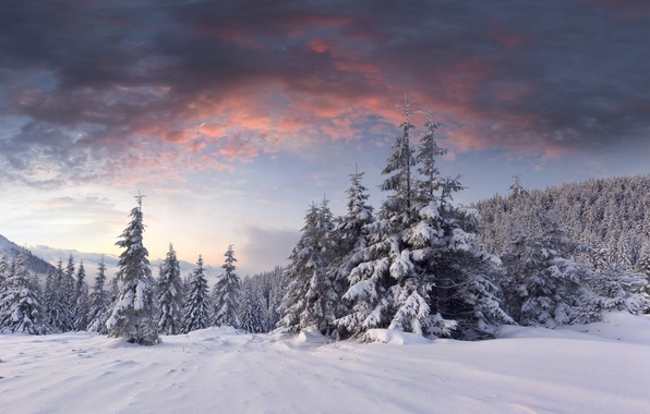 Picture winter, forest, clouds, snow, dawn, hills, tree