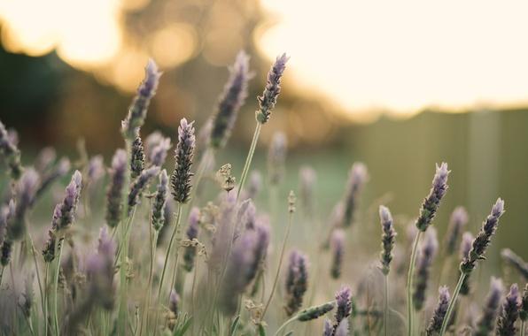 Picture field, flower, macro, flowers, background, pink, widescreen, Wallpaper, plant, petals, wallpaper, flowers, flower, widescreen, background, …