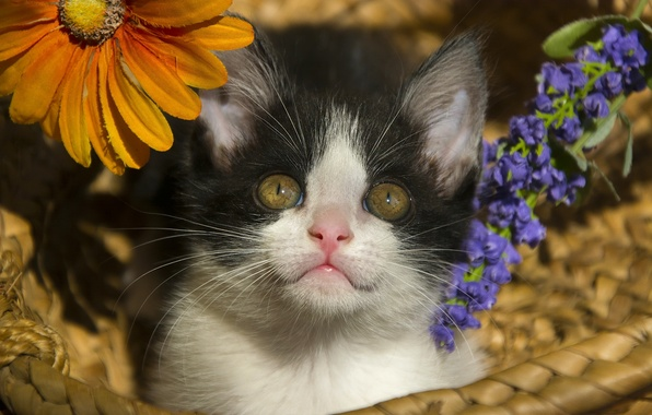 Picture look, flowers, basket, baby, kitty, face