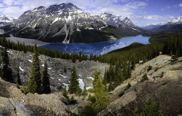Picture forest, trees, mountains, lake, stones, rocks, Canada, panorama, Banff, Peyto Lake