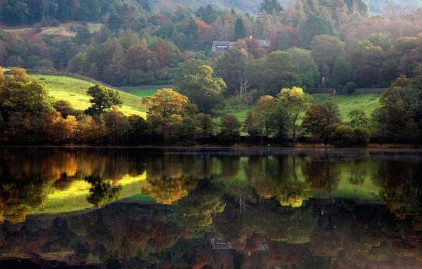 Picture forest, trees, landscape, river, shore, Nature, house