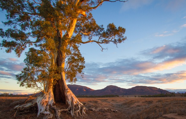Picture mountains, tree, the evening, Australia, South