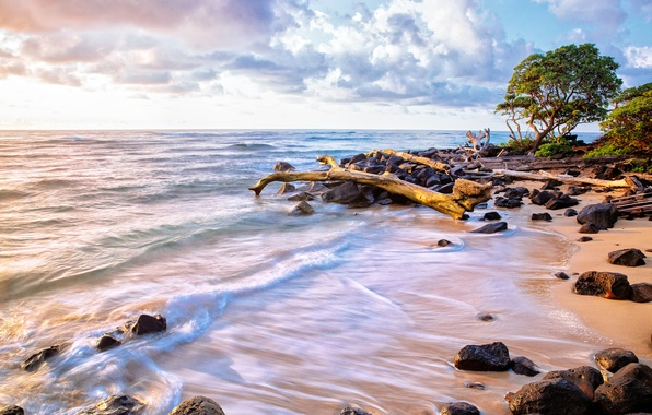 Picture sand, sea, wave, beach, the sky, water, clouds, trees, branches, nature, stones, the ocean