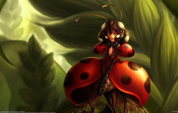 Picture ladybug, being, insect, Yangtian Li