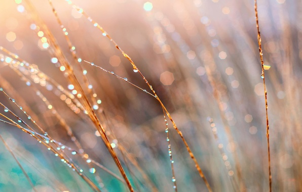 Picture grass, macro, light, Rosa, glare, morning
