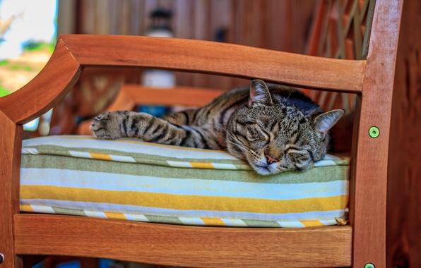Picture cat, sofa, animal, sleeping