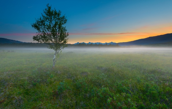 Picture field, landscape, nature, fog, tree, morning