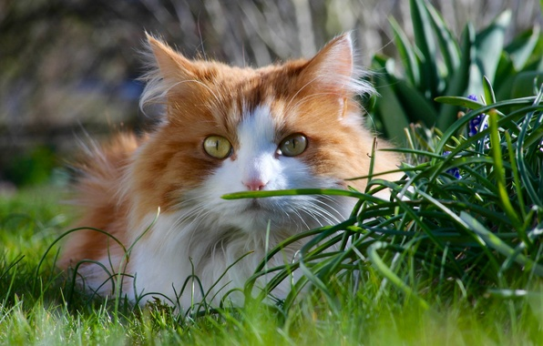 Picture cat, grass, cat, look