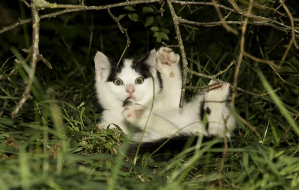 Picture grass, branches, legs, baby, kitty