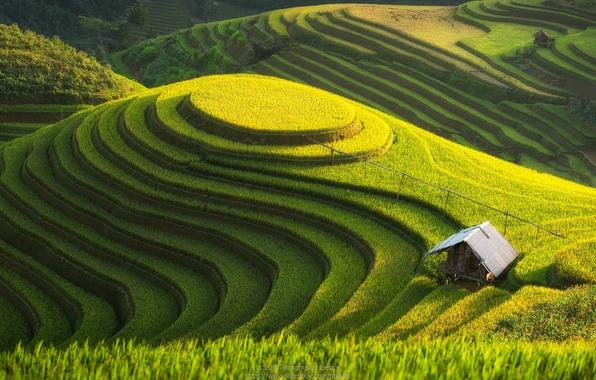 Picture field, nature, hill, plantation