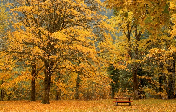 Picture autumn, leaves, bench