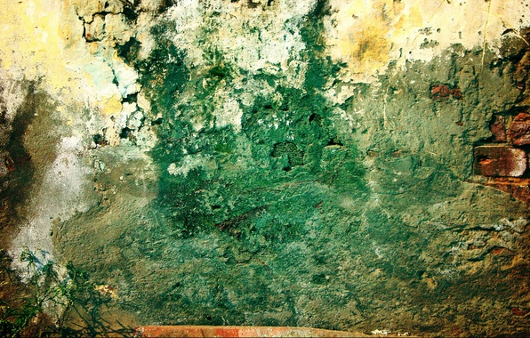 Picture green, wall, pattern, grunge, plant, brick, dirty