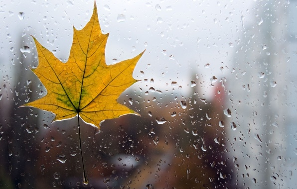 Picture glass, water, drops, macro, yellow, background, rain, Wallpaper, leaf, wallpaper, form, leaf, rain, widescreen, background, …
