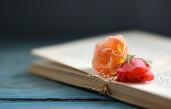 Picture flowers, background, Wallpaper, rose, book, flowers, owner, page, wallpapers
