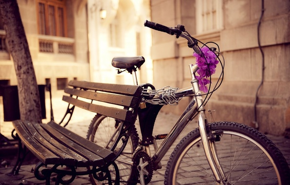 Picture flowers, bench, bike, the city, street, chain