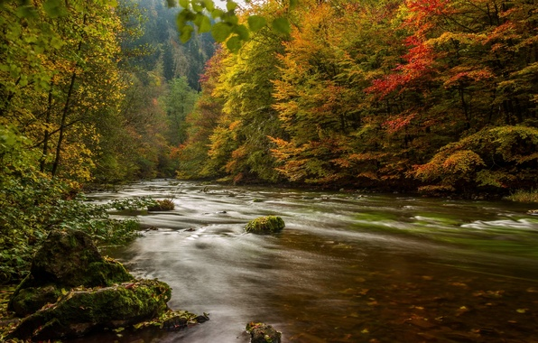 Picture autumn, forest, trees, river, Germany, Germany, Resin, Harz