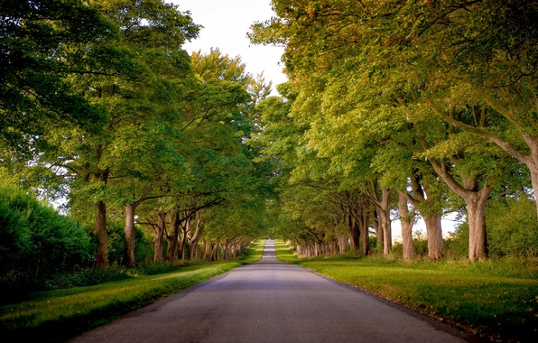 Picture road, trees, England, alley, England, Norfolk, Kings Avenue, Norfolk, Sandringham