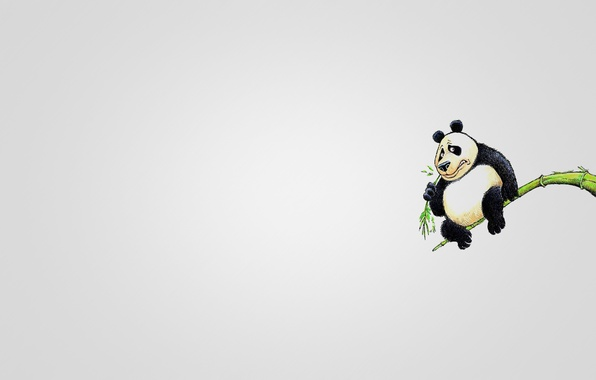Picture tree, animal, minimalism, branch, Panda, sitting, eats, panda